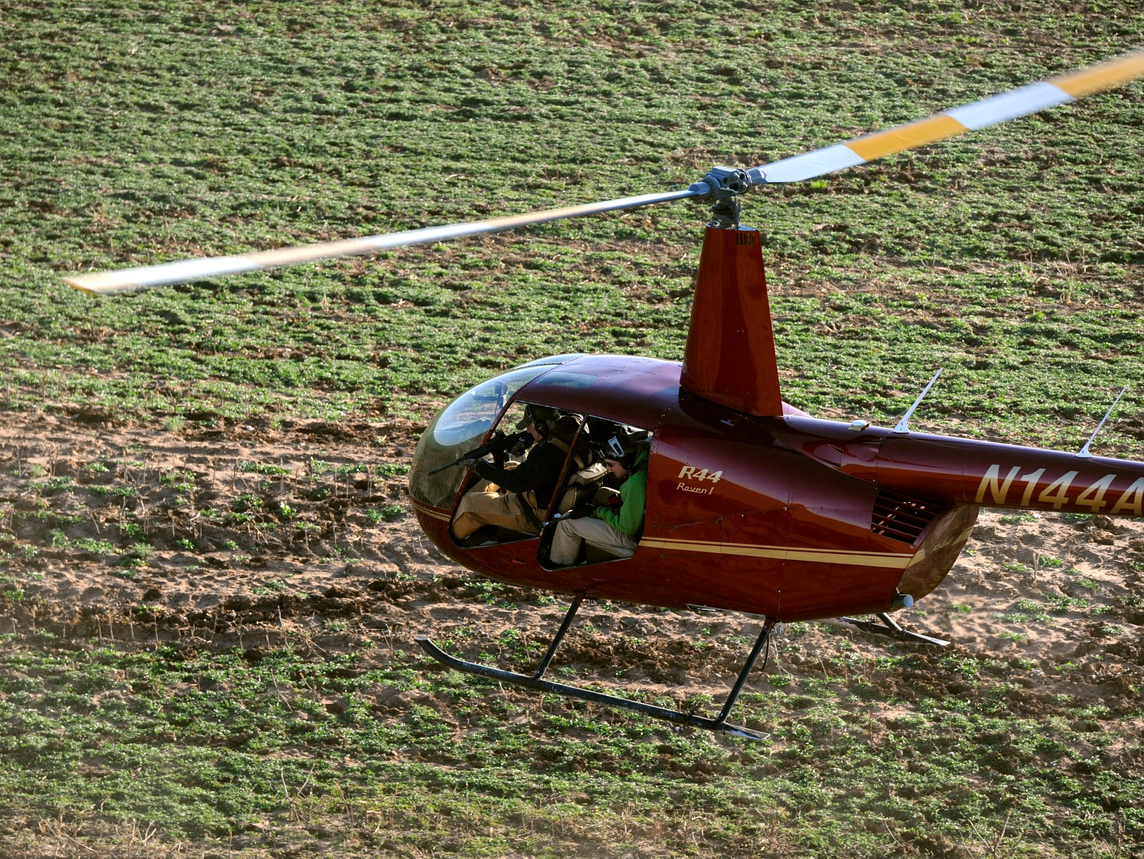 Hunters shoot at feral hogs from a helicopter while