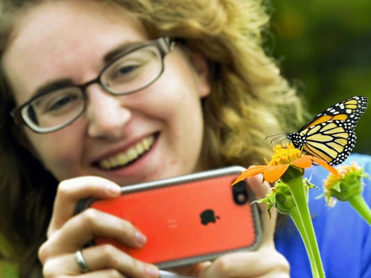 Kelly Patches, of Franklin County Penn State Extension, photographs a monarch butterfly after it was  released Tuesday on Franklin Farm Lane, Chambersburg. A dozen butterflies were released during preservation program sponsored by Penn State Extension Office.