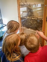 has been awarded an Observation Bee Hive Grant from