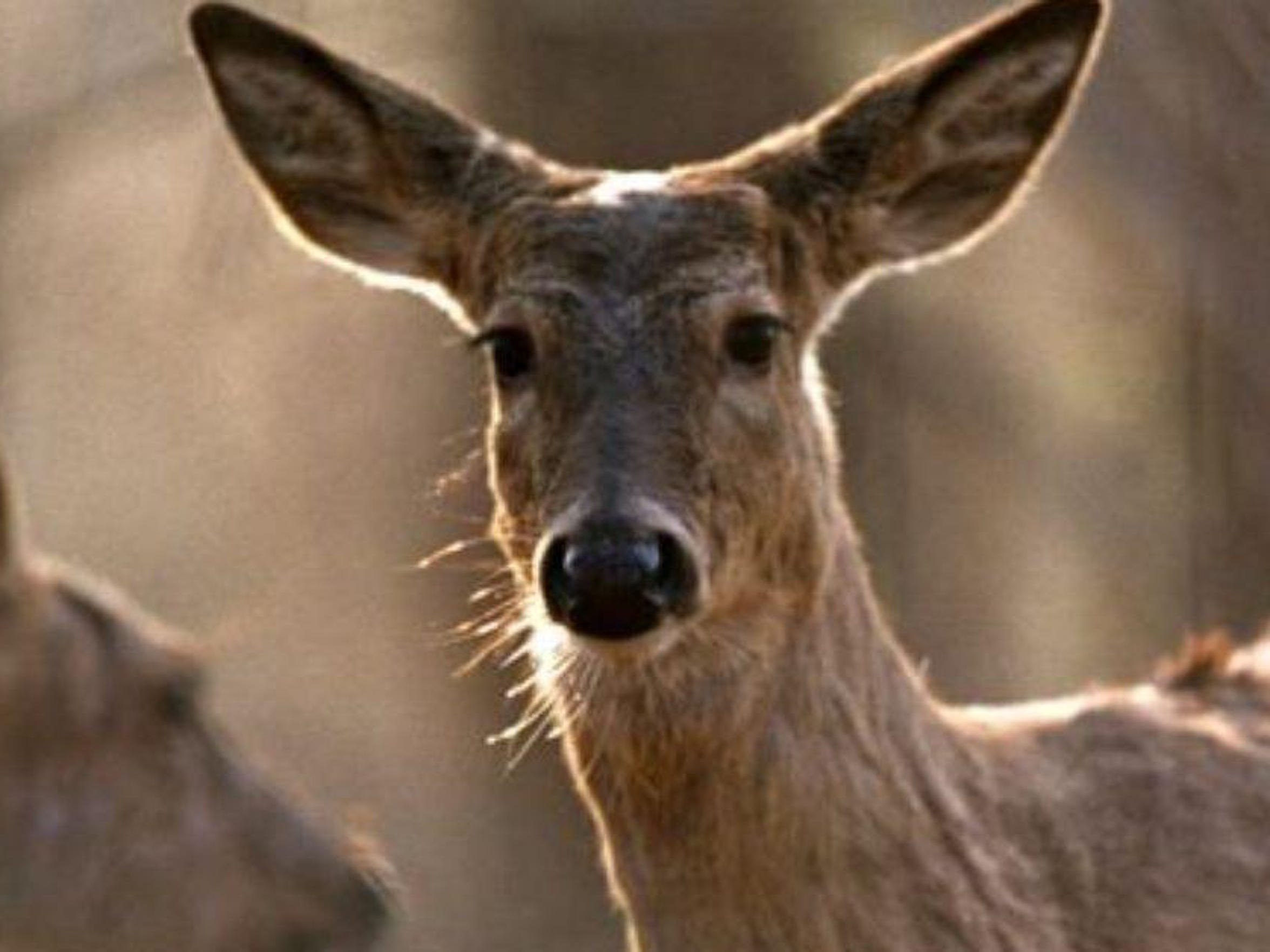 Bow hunters will be heading out to their blinds on Monday for the start of archery season in Michigan.