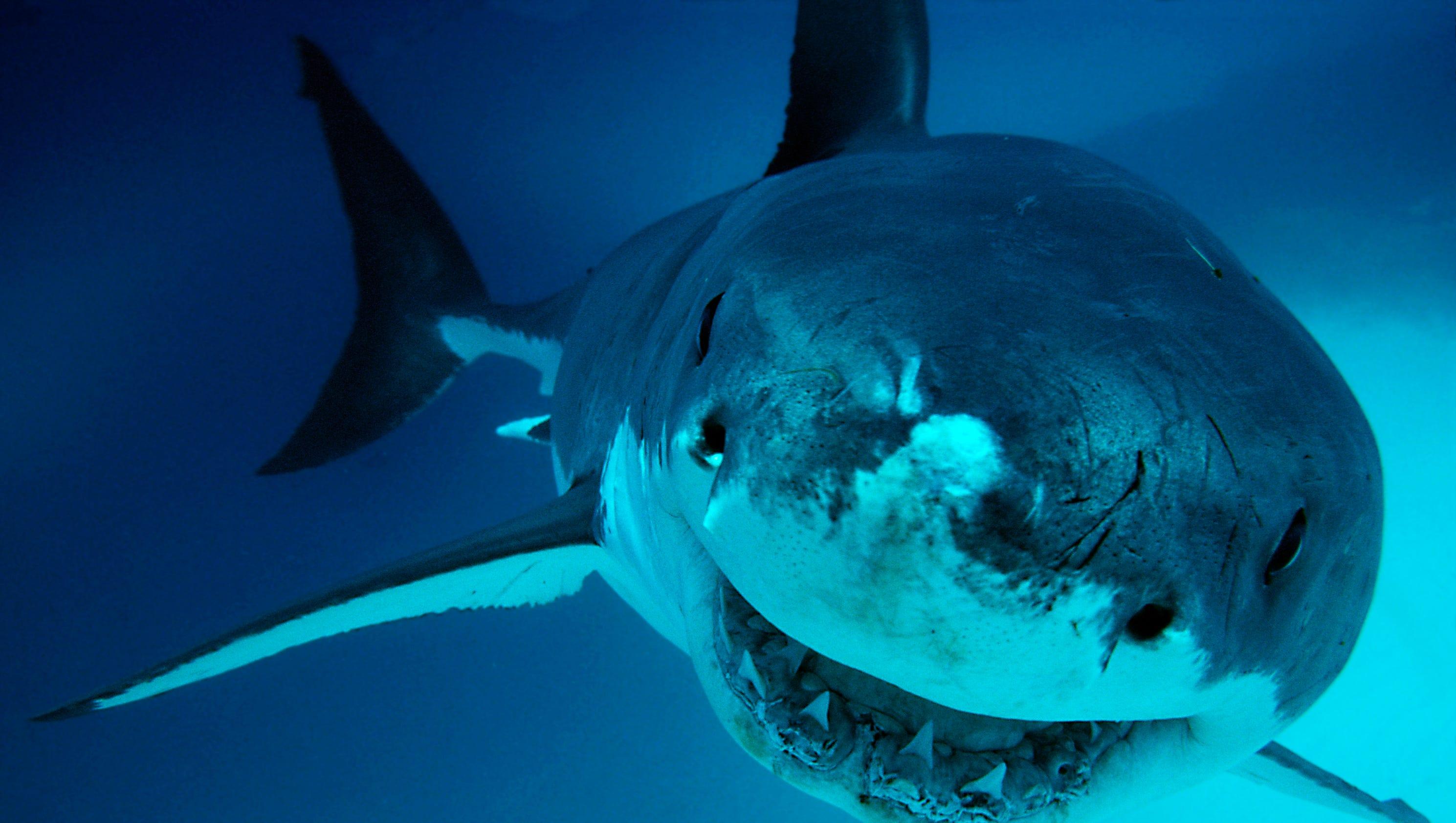 636493690823517858-d-shark-week-25