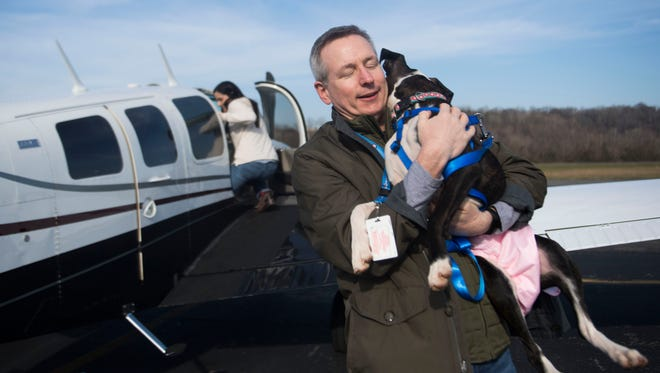 Five-month-old boxer Sophia, who has high anxiety, is held by Scott Evans as his wife Jackie boards the plane they will fly to South Carolina with Sophia on board so she can receive therapy, at Island Home Airport in Knoxville, Tenn., Saturday, Dec. 16, 2017. After Sophia's treatment she will be brought back to Knoxville for adoption, the exchange was made possible by East Tennessee Boxer Rescue and Pilots for Paws.