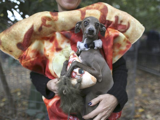 """Twiggy, an Italian greyhound in a """"pizza rat"""" costume, participates in the annual Tompkins Square Halloween Dog Parade in New York on Saturday, Oct. 24, 2015."""
