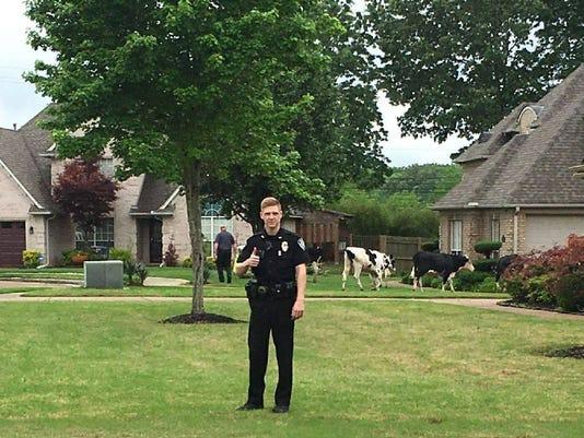 636614835434334730-Bartlett-cows.jpg