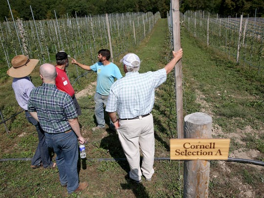 Farmers from the Northeast gathered at the Wegmans Organic Farm to share growing strategies for fruits and vegetables.