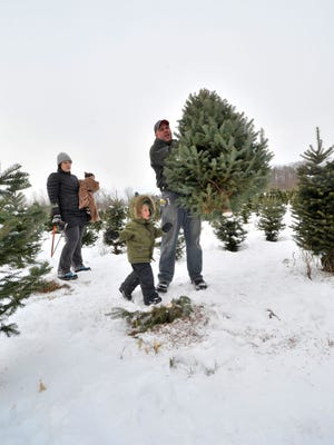Nelson Eisele, right, of Wausau carries the tree chosen by his family, wife Helen Walsh, and sons Owen, 2, and Elliot, 6 months, at Newby's Evergreen Farms in rural Wausau.