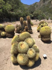 Travel Trip Catalina Island (2)