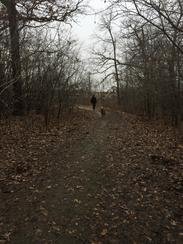 A man walks his dog along a path on the County Grounds.