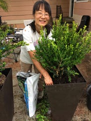 My friend, Naomi, planted new shrubs on my patio and