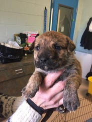 The SPCA took in a litter of puppies found in the woods this weekend. They need some tender loving care right now but should be ready for adoption at the Cumberland County SPCA in a few weeks.
