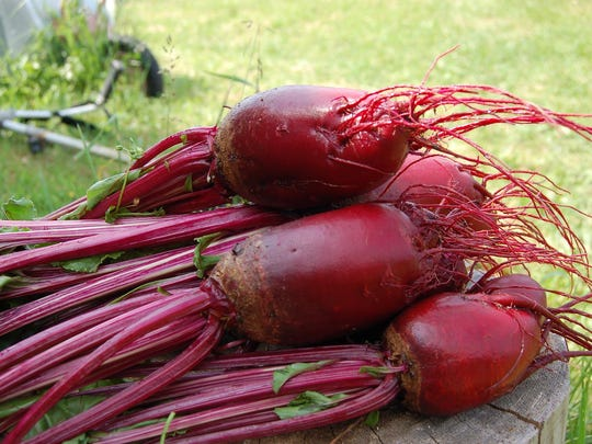 Beets have traditionally been grown for the root, but now the foliage may prove in greater demand by winter gardeners.