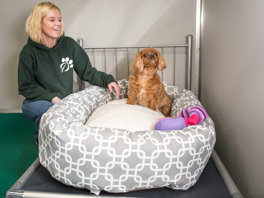Pet hotel manager Amber Milutis laughs as Hershey,
