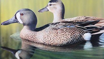The winning submission for the 2015 Waterfowl Stamp contest.