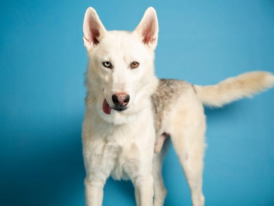Amarok is available at the Arizona Humane Society's