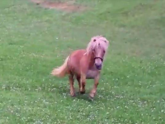 636275992443530828-Horse.JPG