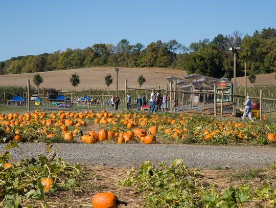 Ready for pumpkin-picking at Grim's Orchards in Breinigsville,