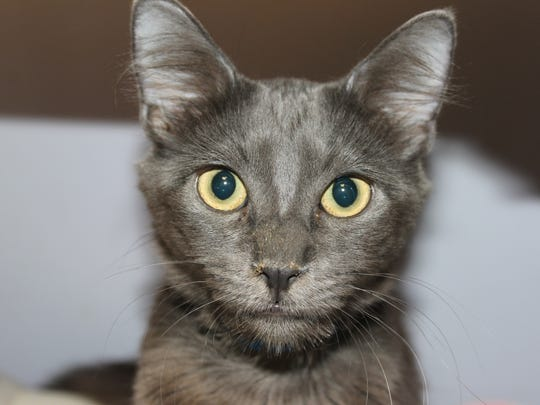 Cat adoptable from a hoarder's home.