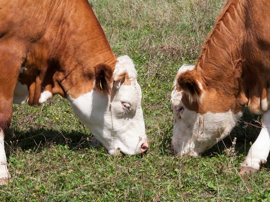 Damaged plant processes 6% of all cattle processed in the U.S.