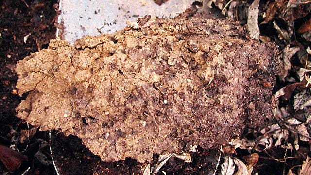 In this undated photo, large and small pores abound in this well-aggregated soil, offering roots access to both air and moisture in New Paltz, N.Y.