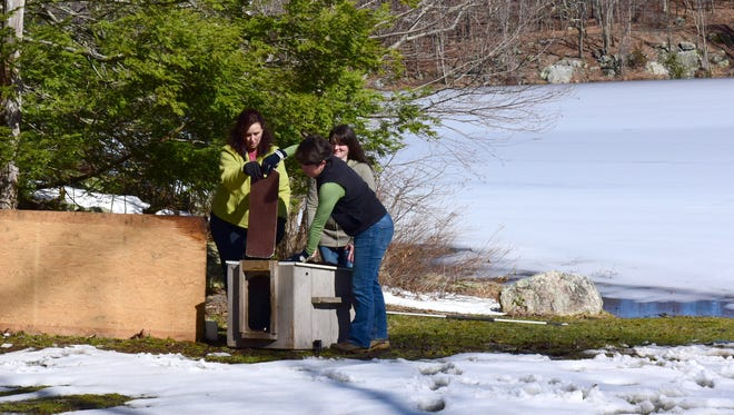 From left, Tracy Leaver, of Woodlands Wildlife Refuge, and Gretchen Fowles, of NJ Division of Fish and Wildlife, lift the opening for the bobcat to leave captivity.  The New Jersey Division of Fish and Wildlife released into the wild a young bobcat that had been rehabilitated from a serious leg injury after being struck by a car late last year in Passaic County. The bobcat's release took place at Waywayanda State Park in Passaic County following months of rehabilitation at the Woodlands Wildlife Refuge in Hunterdon County.