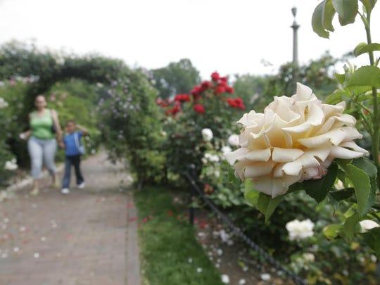 Visitors walk through the roses at the Brooklyn Botanic