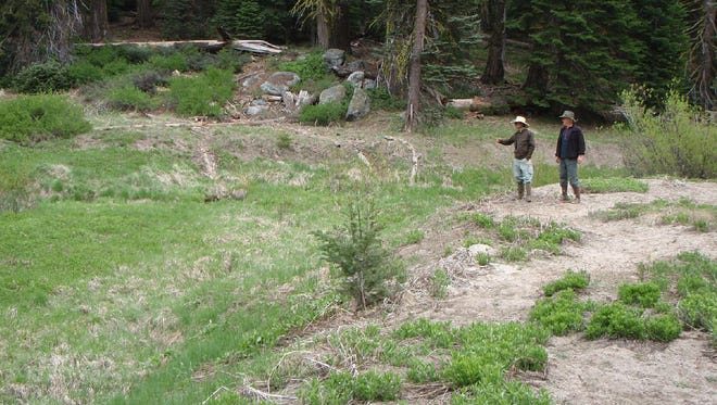 The Halstead Medow, located in the Sequoia and Kings National Park is seeking the public's comment on which route to take in the third and final phase of a restoration project.