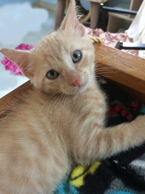 """My name is Creamsicle but you can call me """"Mister Personality"""" because I'm such a sweet and fun little guy!"""