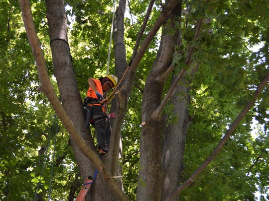 Wen Zhou, of The Care of Trees in Mount Kisco, prepares