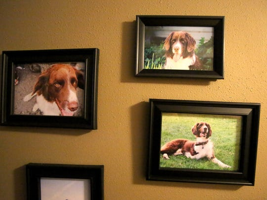 Photos show Sully, the namesake for The Three Legged Dog Public House  in Independence.