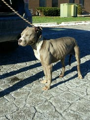 Cody arrived at the Detroit Dog Rescue with pneumonia.