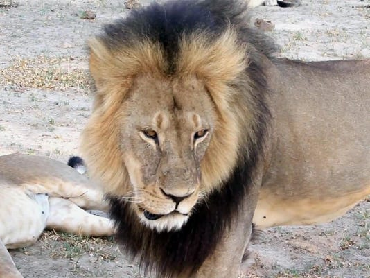 Zimbabwe Lion Killed_Gann