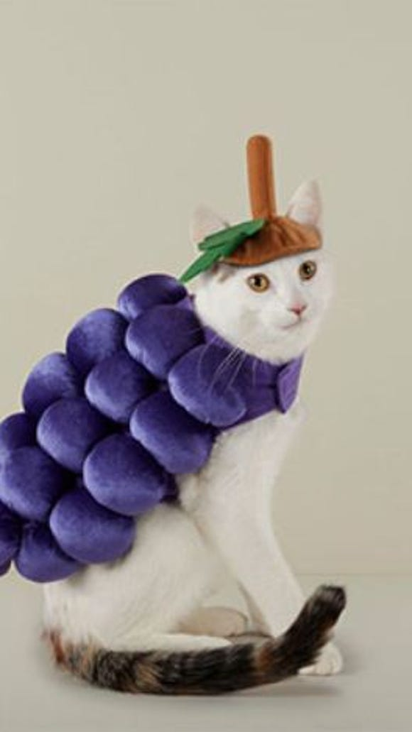 A grape costume for cats for Halloween from Target.