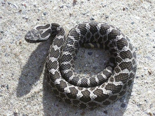 how to get a venomous snake license