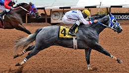 Terry Baber's All American Derby runner-up Sam Crow runs in a strong $18,000 allowance race on Sunday afternoon at Ruidoso Downs.