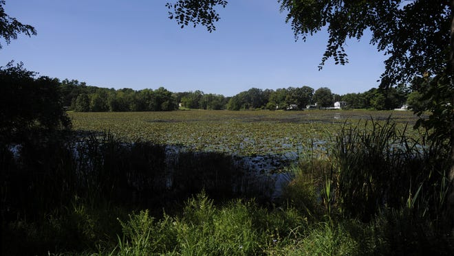 Hillside Lake in the Town of East Fishkill is now mostly covered with vegetation. August 19, 2014