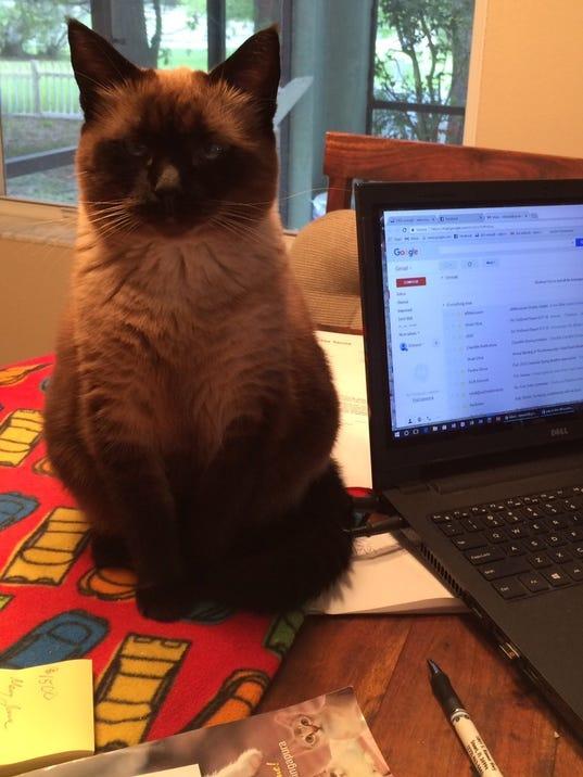 0307-YNMC-CATTY-eric-office-cat.jpg