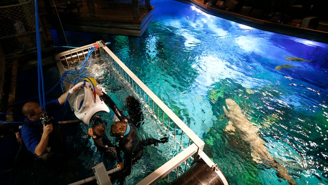 Divers descend into a shark cage in Wonders of Wildlife's newest attraction, the Out To Sea Shark Dive, where visitors don wetsuits, diving helmets and climb inside a shark cage that takes you into the aquarium's shark tank.