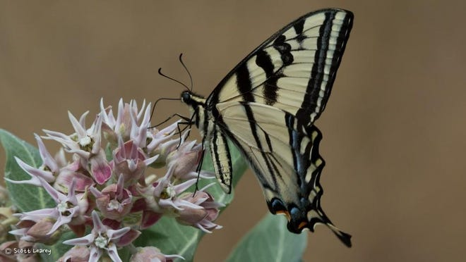 "The Nevada Department of Wildlife and Nevada Bugs and Butterflies will present ""The Beauty of Bugs & Butterflies,"" on Aug. 21 at Oxbow Nature Study Area in Reno."