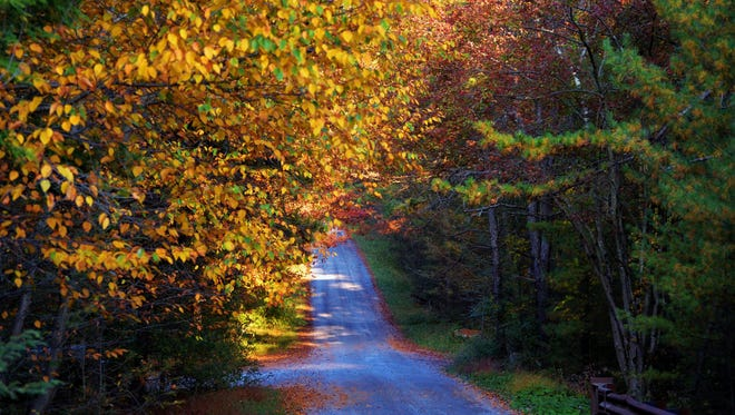 A country road can lead to finding some spectacular fall foliage.