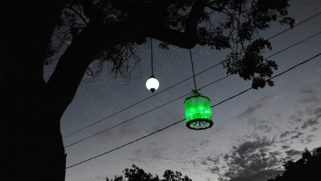 A closeup of the lantern tree at twilight on Acacia Street in Salinas.