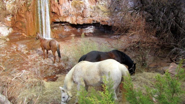 The owner of these horses provides a caring home for the equines.
