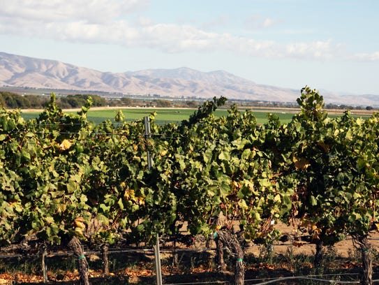 Most of the wine in Monterey County is exported to