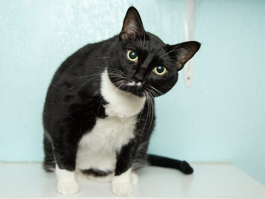 Bootsie is available for adoption at 9226 N. 13th Ave.