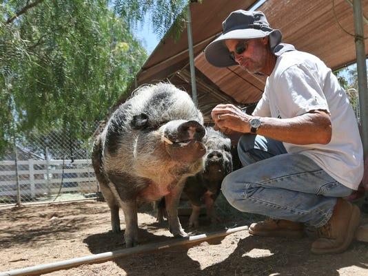 Grazin Pig Acres rescue ranch