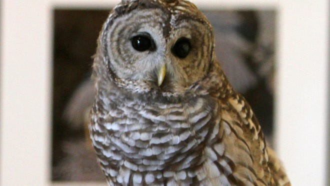 The Audubon Nature Center and Aquarium, Bristol, is having a talk on Hawks & Hoots on Sat. and Sun., Sept. 12 and 13.