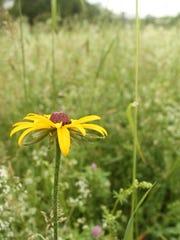 Wildflower fields near Val-Kill are a favorite summer spot.