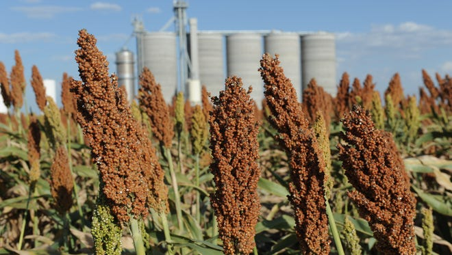 Fields of grain sorghum, also known as milo, surround grain silos in southwestern Kansas. The southern High Plains is one of the regions where NASA satellite measurements have shown losses of water during the past decade.