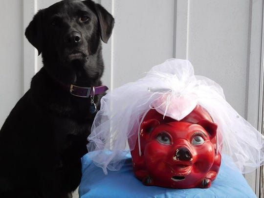 Donna Canzoneri's wedding pig, with her Lab Remy, is on Marquette.