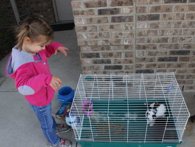 Rachel Williams looks over the bunnies at the Hope Lutheran Church Easter Egg hunt April 12.