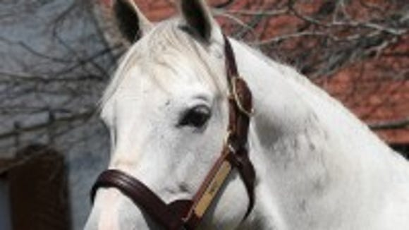 Gainesway Farm's stallion Tapit